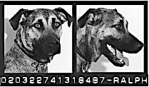 DOGSCATS-mug-1