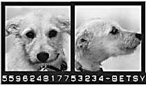 DOGSCATS-mug-2
