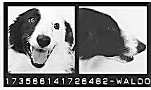 DOGSCATS-mug-3